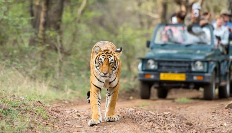 indija-grupni-polazak-travel-partner11