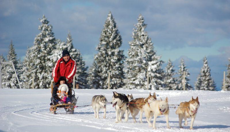 Rogla-winter-fun-dog-sledges-Travel-Partner36